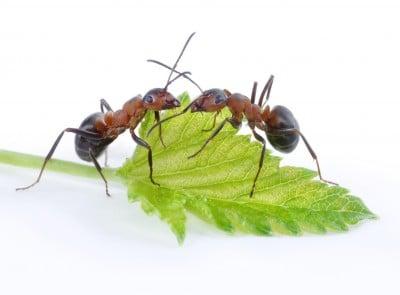 Vous avez des centaines de fourmis qui s'infiltre partout ?