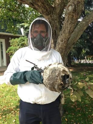 R.Lessard capte un nid de guêpe