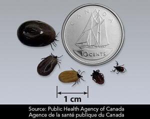 Tiques Agence de la Santé publique du Canada