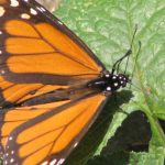 Papillons de jour et de nuit.