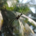 Lutter contre la phobie des araignées