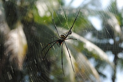 Phobie des araignées
