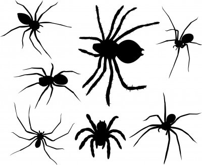 La reproduction d'araignée est phénoménale.