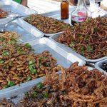 L'entomophagie, manger des insectes c'est l'avenir