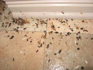 Nid de fourmis avec les oeufs