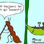 Des fourmis paresseuses est-ce que c'est possible?