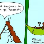 fourmis paresseuse