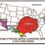 recluse brune localiser geographiquement