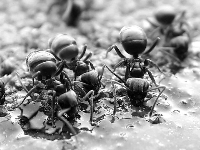 fourmis changent de couleur