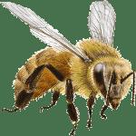 exterminateur abeille