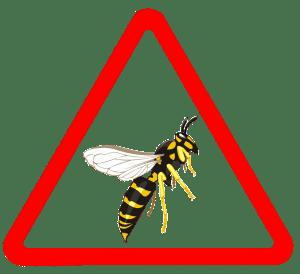 danger piqûre de guêpes