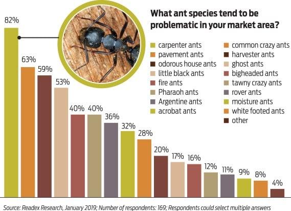 identifier fourmis